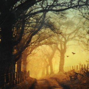 """Jenny""""s Tree, Stirling"""