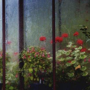 Botanic Windows