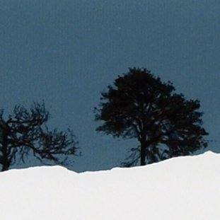 Three Trees, Perthshire