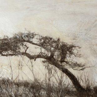 Glenfarg Tree