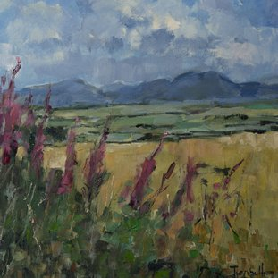 Willowherb Towards Doune Hills